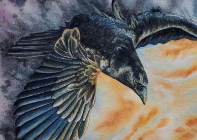 Chasing the Light Raven