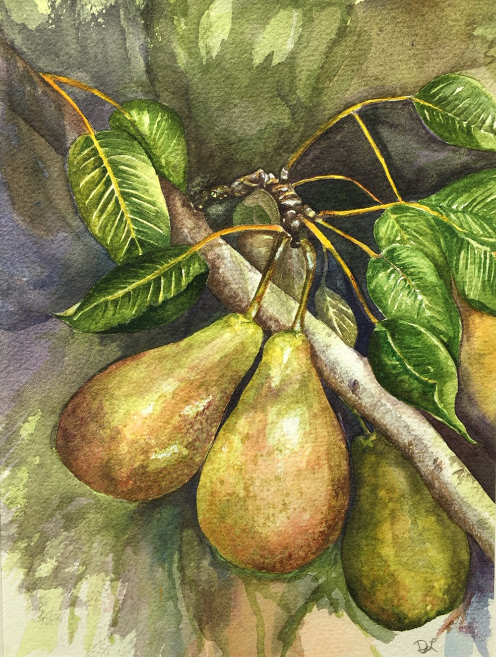 Pair of Pears by Donna Larkin